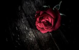 Moć cvijeća u domu
