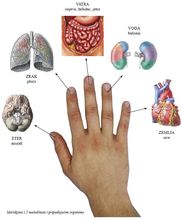 ayurveda-dijagnostika1
