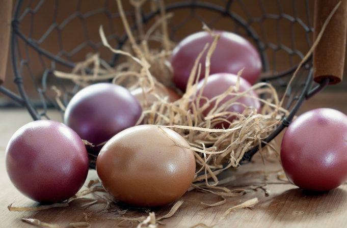Sav život dolazi iz jajeta