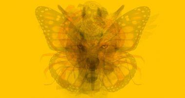 Odaberite životinju koju prvo vidite na ovoj slici i pronađite suštinu svoje duše
