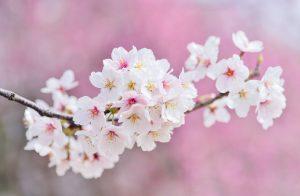 10 razloga zašto su osobe rođene u aprilu zaista posebne